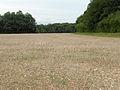 Farmland, Amport - geograph.org.uk - 469925.jpg