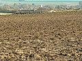 Farmland east of the White Horse Trail, west of Beckhampton - geograph.org.uk - 1057047.jpg