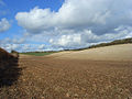 Farmland on the downs near Lambourn - geograph.org.uk - 726080.jpg