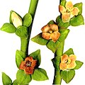 Female flowers of Diospyros lotos.jpg