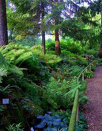 Botanical Garden Of The University Of Heidelberg Wikipedia