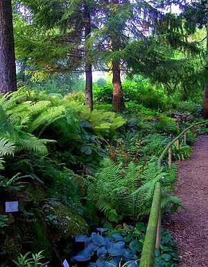 Botanical Garden of the University of Heidelberg - Fern ravine