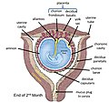 FetalMembranes1L.jpg