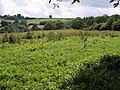 Field near Barley Hill Farm - geograph.org.uk - 481115.jpg