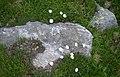 Fiori rifugio jervis ceresole reale.jpg