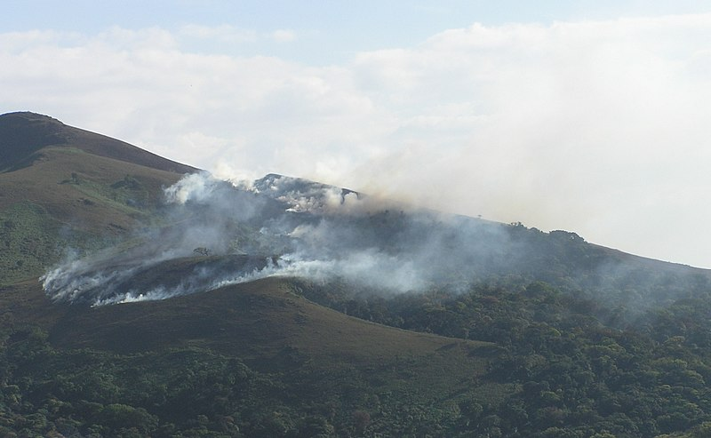 File:Fire in montane rainforest Bababhudan hills v1.jpg