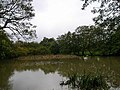 Fishpond, Beechwood Lane, Cooksbridge - geograph.org.uk - 70554.jpg