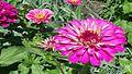 Fleur110.jpg