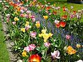 Fleur couleurs.jpg