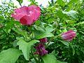Fleur pp3.jpg