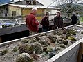 Flickr - brewbooks - Alpine House - Glendale Rock Garden (2).jpg