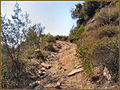 Flickr - ronsaunders47 - Backwoods path in Thassos Greece..jpg