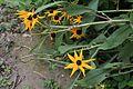 Flora im Landschaftsschutzgebiet Salzachsee-Saalachspitz 07.jpg