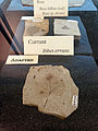 Florissant Fossil Beds fossil 5.JPG