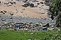 Flotsam and Jetsam - geograph.org.uk - 1945340.jpg