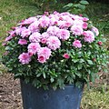 Flower bucket small.jpg