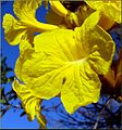 Flowers, Parkwood and Olive, Redlands 1-24-13c (8595963176).jpg