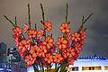 Flowers (7683094262).jpg