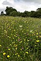Flowery meadow at Westerdale - geograph.org.uk - 470127.jpg