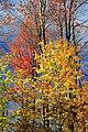 Foliage Walk (13) (30053494160).jpg