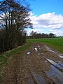 Footpath Junction, South of Boggy Wood - geograph.org.uk - 352625.jpg