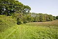 Footpath about to enter Blundell's Copse - geograph.org.uk - 1329151.jpg