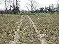 Footpath across field near Northbourne - geograph.org.uk - 346859.jpg