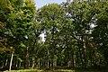Forêt départementale de La Roche-Guyon n01.jpg