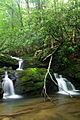 Forest-Waterfalls-2 ForestWander.JPG