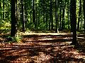 Forest Walk - panoramio (4).jpg