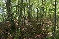 Forest in Doshi 01.jpg