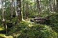 Forest in Yatsugatake 43.jpg