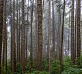 Forest near Sombrio Point, Juan de Fuca Trail, Vancouver Island, Canada 12.jpg