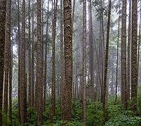 Forest near Sombrio Point, Juan de Fuca Trail, Vancouver Island, Canada 12.jpg