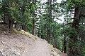 Forest path - Annapurna Circuit, Nepal - panoramio (1).jpg