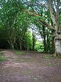 Forge Wood - geograph.org.uk - 505853.jpg