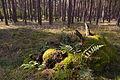 Forst Rundshorn IMG 1750.jpg