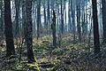 Forst Rundshorn IMG 4987.jpg