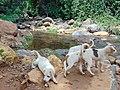 Four puppies.jpg