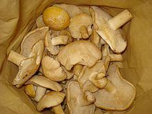 Funghi prugnoli