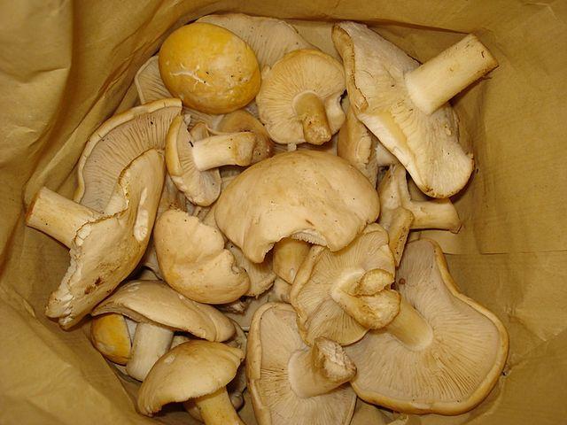 Risultati immagini per funghi