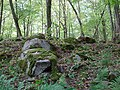 Głazowisko koło Leśniczówki Rostek - panoramio.jpg