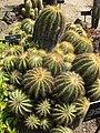Gardenology.org-IMG 4274 hunt0904.jpg