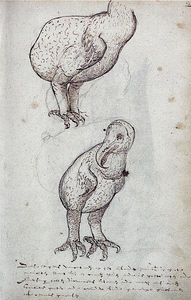 File:Gelderland1601-1603 Raphus cucullatus3.jpg