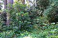 General view - VanDusen Botanical Garden - Vancouver, BC - DSC06809.jpg