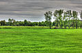 Gfp-southern-wisconsin-landscape-and-livestock-in-the-distance.jpg