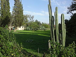 Gibton, with cactus in the foreground.jpg