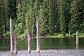 Gifford Pinchot National Forest, Goose Lake (36361264653).jpg