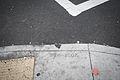Grand Avenue Sidewalk Stamp-2.jpg