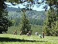 Granite Cemetery - Granite Oregon.jpg